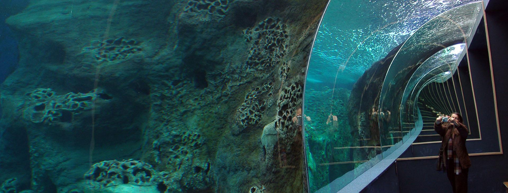 Cretaquarium, Gouves, Heraklion